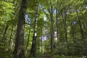 arbori_salvati__datorita_fondurilor_colectate_prin_2___wwf_a_reusit_sa_salveze_300_de_he_428588